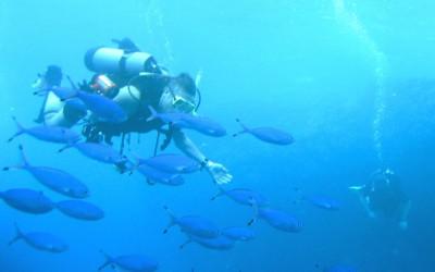 Diver07