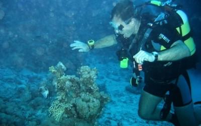 Diver11
