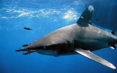 Shark06_edited