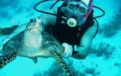 Turtle04